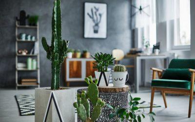 Savoir décorer son espace avec des plantes vertes