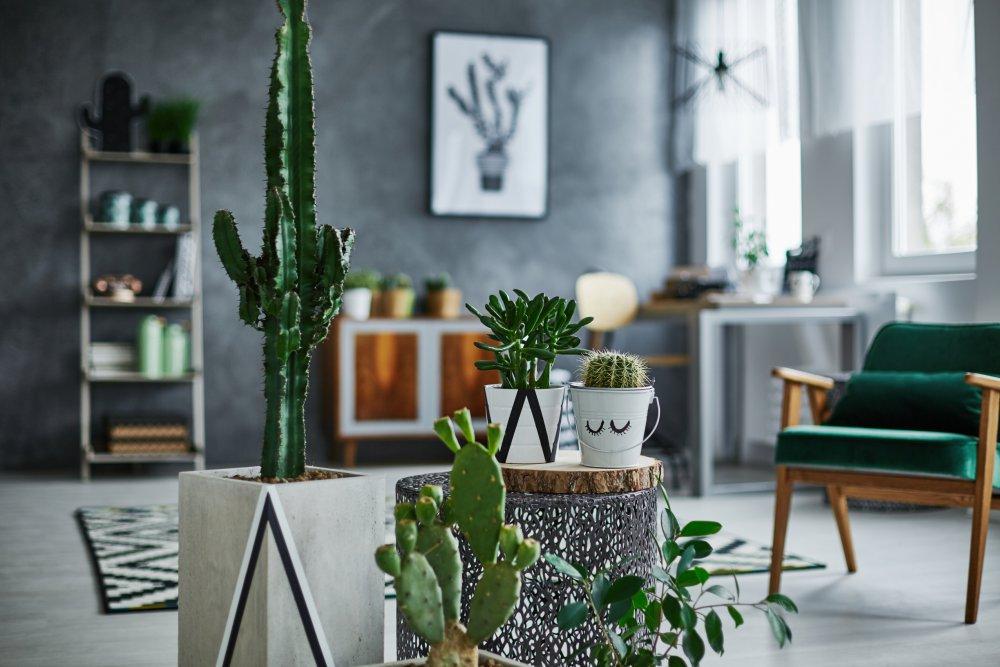 Savoir décorer son espace avec des plantes vertes, décoration intérieure, déco intérieur, home staging